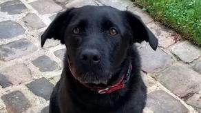 რა თქვა ნემომ - მაკრონის ძაღლის საშობაო მიმართვა - VIDEO