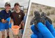 Двуглавая черепаха была найдена у берегов США