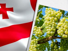 კახეთში 16 ათასი ტონა ყურძენია გადამუშავებული