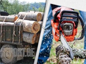 ტყის ეკონომიკური სარგებლიანობა იზრდება