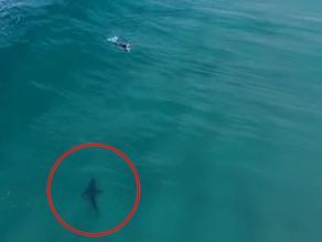 ავსტრალიაში სერფერი და მკვლელი ზვიგენი ერთად დაცურავენ - VIDEO